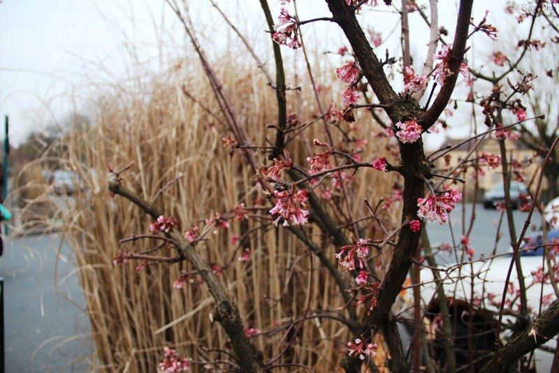 Obwohl wir vor Kälte noch zittern, lächelt uns der Frühling schon an
