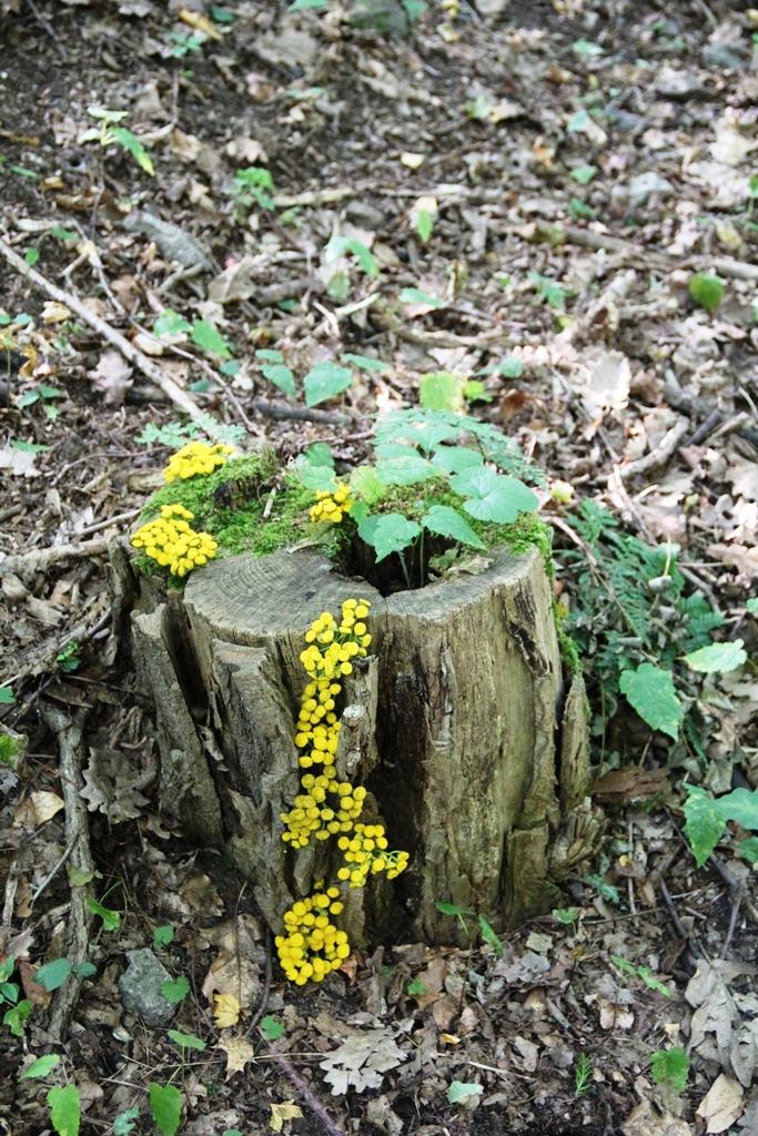 Kunst im Wald-08